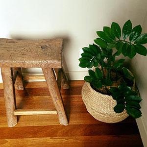 Greenscene | Indoor Plant Hire
