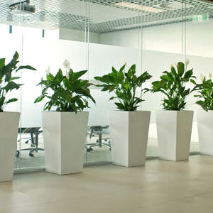 Greenscene Indoor Plant Hire