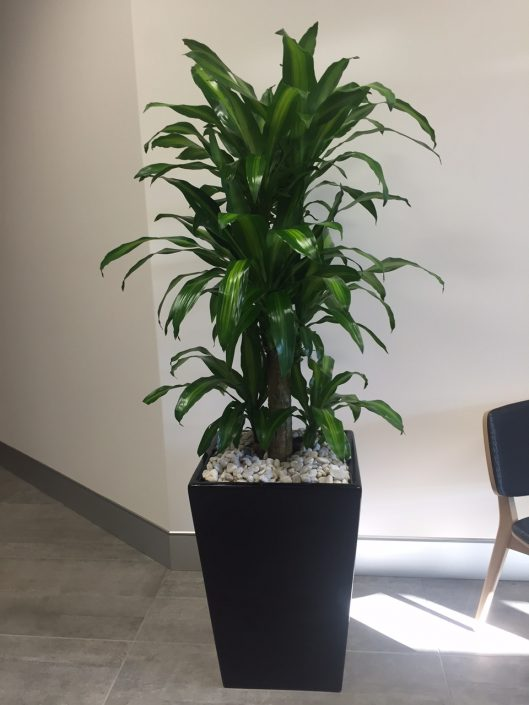 Happy Plant indoor plant hire
